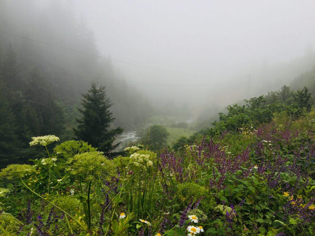 Anzer Yaylası, güneşli havada ayrı güzel, sisli ve yağışlı havada ayrı güzel.